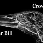 Pekin duck BriteVu arteriovenogram.