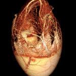 BriteVu goose embryo